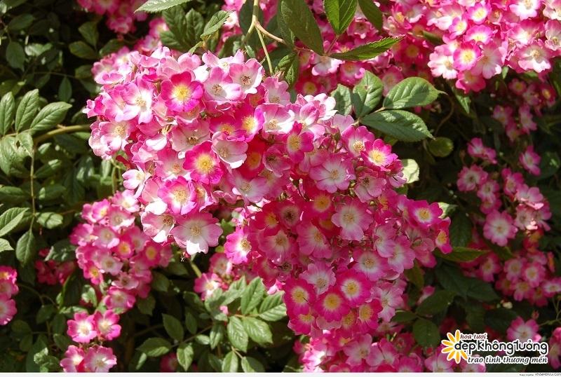 cay hoa tuong vi cay trong canh quan cho hoa dep ruc ro