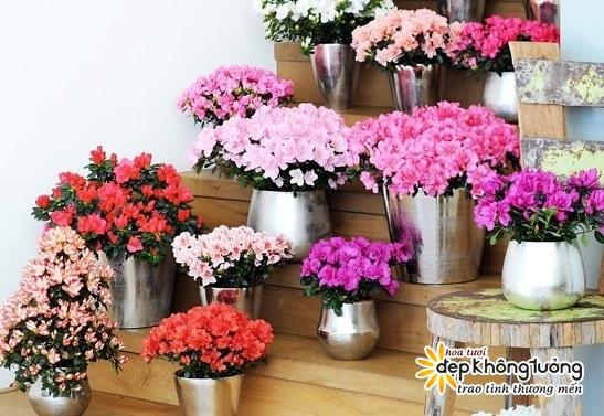tai sao hoa do quyen chua chat doc van duoc dan tinh   8217 ran ran  8217  chon mua chung tet