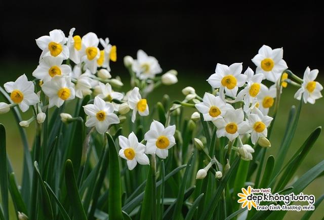 nhung loai hoa duoc ua chuong nhat trong ngay tet den xuan ve